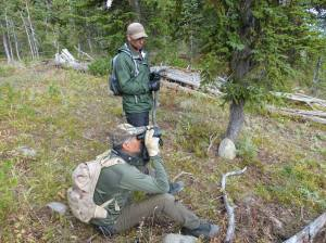Yellowstone Wolf Patrol