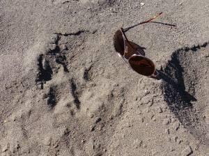 Yellowstone Wolf Patrol - wolf print