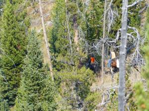 Yellowstone Wolf Patrol - elk hunters