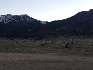 Migrating elk massing at park boundary