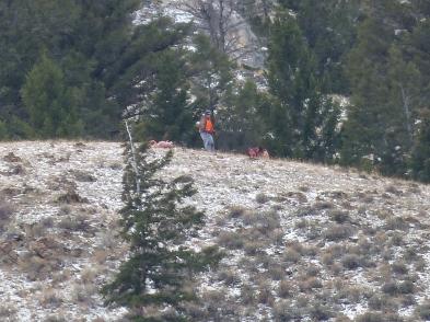 Hunter gutting elk