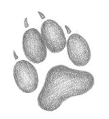 wolf_paw_print_by_midnight_the_kitten-d5t12if