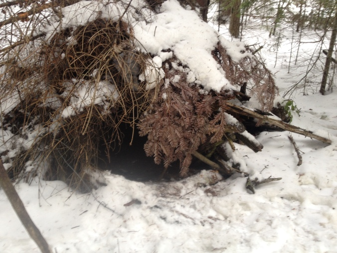 An old wolf den site