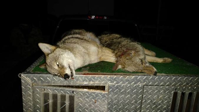 Argonne Coyotes on Dogbox