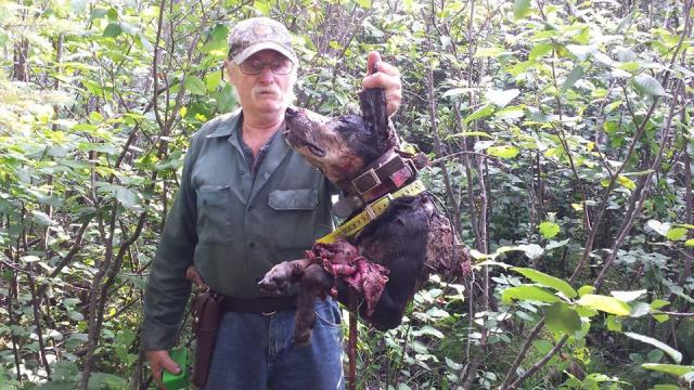 Wolf Killed Bear Hound