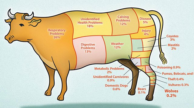 Statistics on What Kills Cows