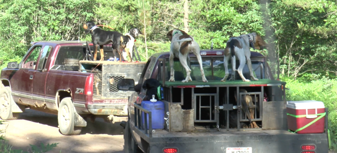 Hounder Trucks w Dogs 7.7.17