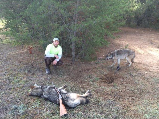 trapper w wi wolves