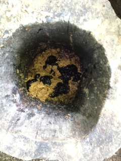 Interior view of exposed bear bait.
