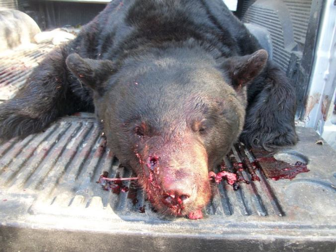 DREHERE DEAD BEAR 2011