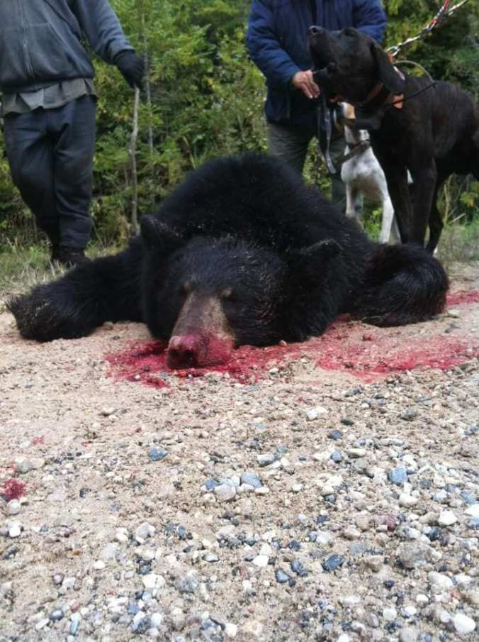 ROBIADEK DEAD BEAR 2017