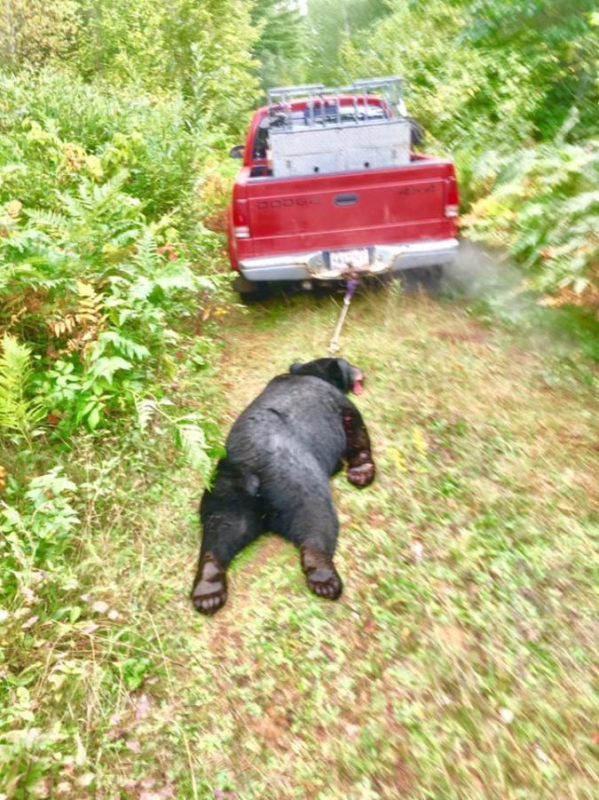 HAMANN DEAD BEAR