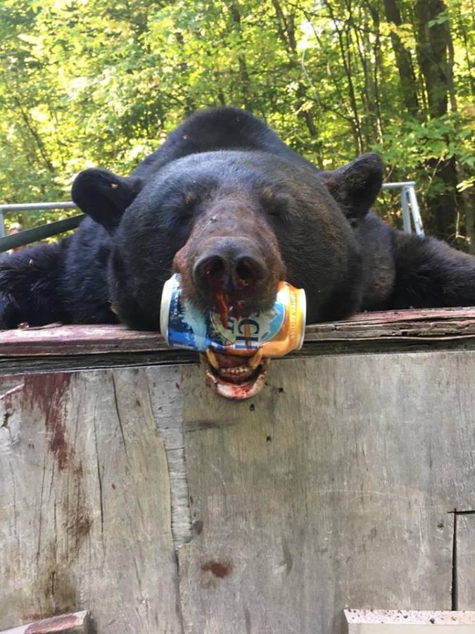 COLE WHITTEMORE BEAR W BEER CAN