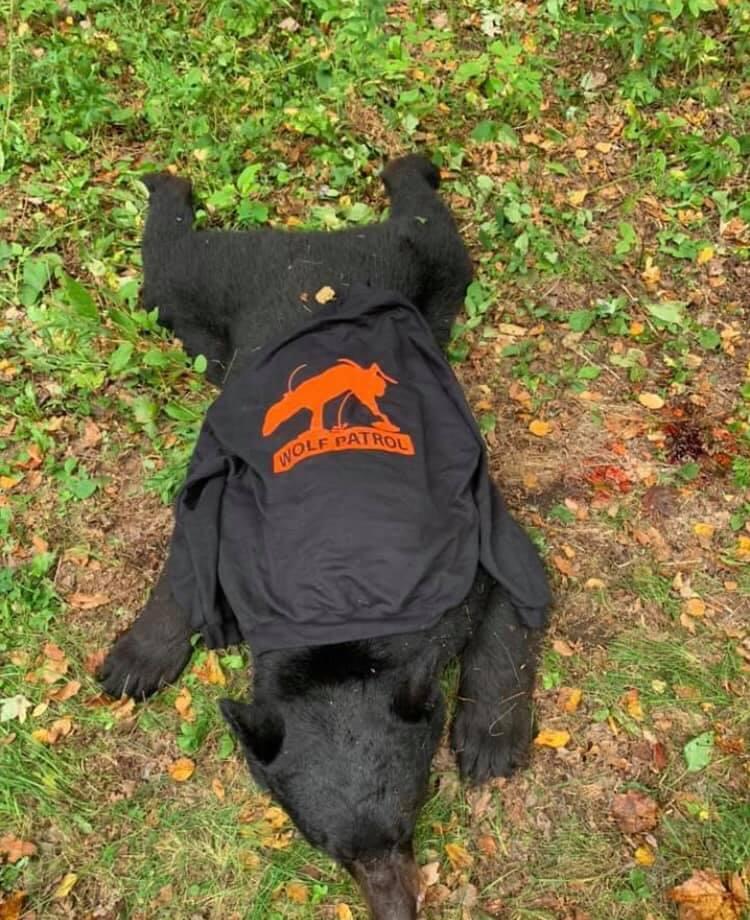 DEAD BEAR W WP HOODIE