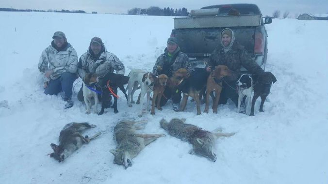 WILTON, WI COYOTE CONTEST
