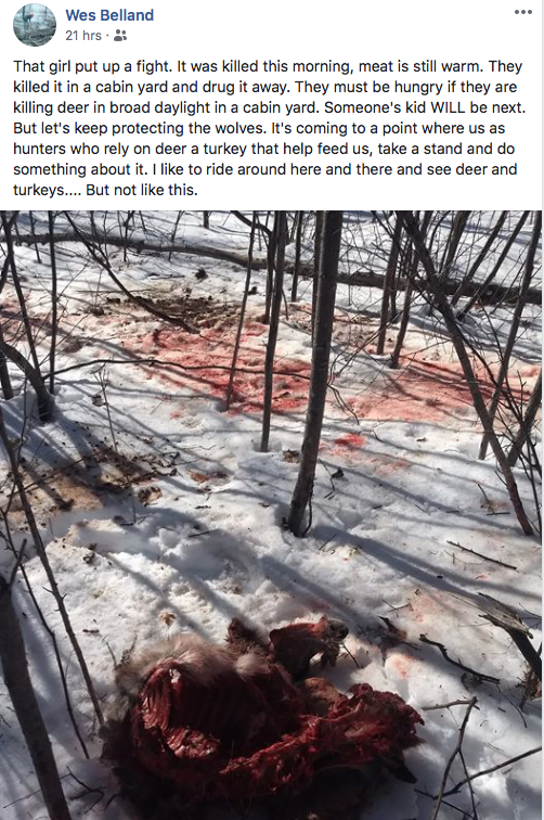 WOLF KILLED DEER COMMENTS