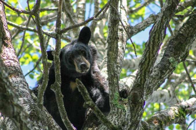 SARA TREED BEAR 2