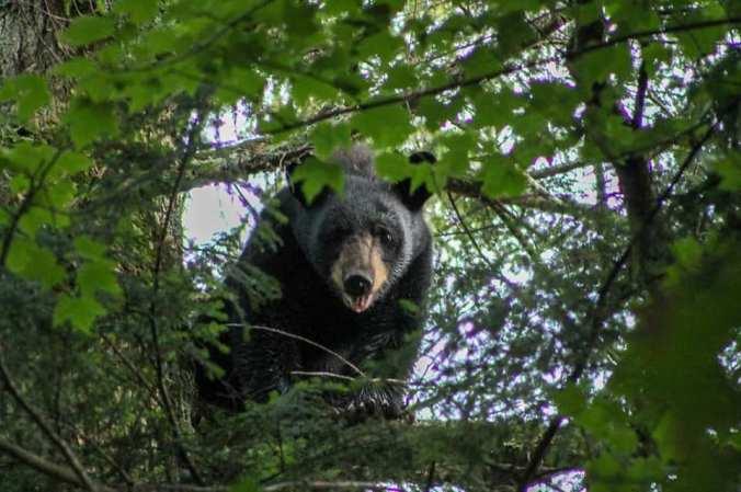08.10.20 SARA BEAR