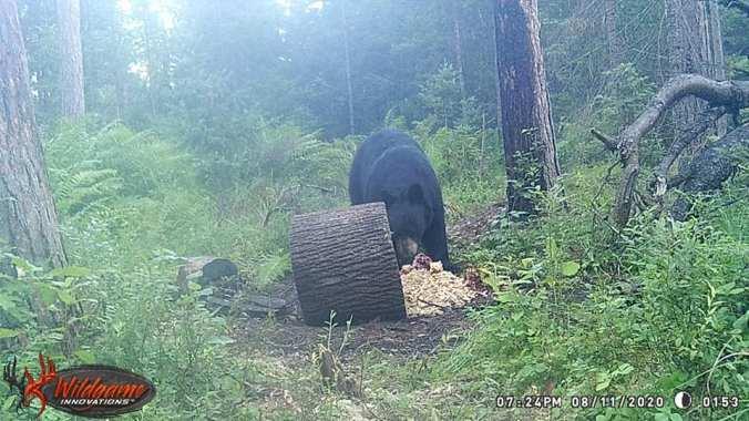 08.11.20 BREMER BEAR